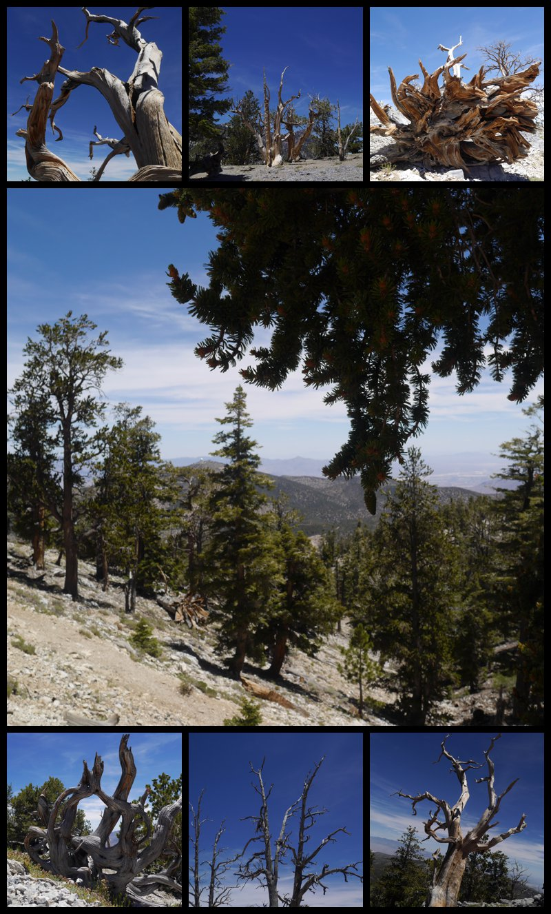 hiking mt charleston